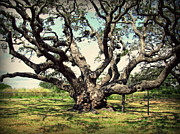 Tree Roots Digital Art Posters - Millennium Live Oak - Big Tree at Goose Island Poster by Ella Kaye