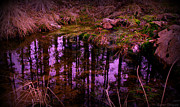 Prescott Photos - Miller Creek Reflections by Aaron Burrows