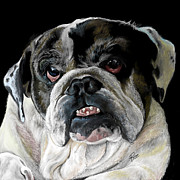 Maria Schaefers Posters - Millie the bulldog Poster by Maria Schaefers