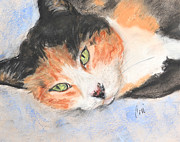 Orange Cat Pastels Posters - Milly Poster by Cori Solomon