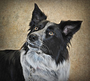 Kelpie Originals - Milly by Janine Robertson
