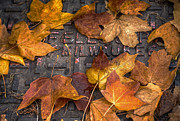 Leaf Photo Prints - Milwaukee Autumn Print by Scott Norris