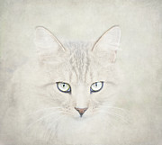 Cat Face Posters - Mind Disarmed Poster by Evelina Kremsdorf