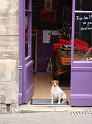 Minding The Shop. Two French Dogs In Boutique Print by Menega Sabidussi