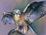 Hawk Pastels Framed Prints - Mine Framed Print by Pat Oldham