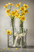 Daffodils Posters - Mini Daffs Poster by Jacky Parker