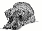 Pinscher Drawings Posters - Mini Pin Poster by Denise Wood