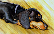 Pet Portraits Framed Prints - Miniature Dachshund puppy Framed Print by Janine Riley