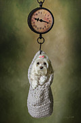 Puppy Mixed Media - Miniature Maltese by Andrea Auletta