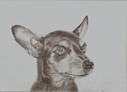 Pinscher Drawings Posters - miniature pinscher Tronter Poster by Sandra Muirhead