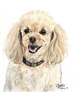 White Pastels Metal Prints - Miniature Poodle Painting Champagne Metal Print by Kate Sumners