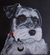 Puppy Drawings - Miniature Schnauzer by Melanie Feltham