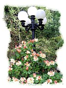 Displays Posters - Minter Gardens Lamp Standard Poster by Will Borden