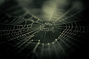 Spider Web Framed Prints - Minus Zero Framed Print by Shane Holsclaw