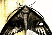 Moth Drawings - Mirror Eyes by Kaelynn Krempel