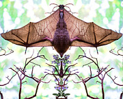 Kim M Smith - Mirror image of a bat...