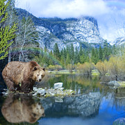 Mirror Lake Bear Print by Alixandra Mullins