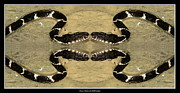 Rose Santuci-sofranko Posters - Mirrored Snake Poster by Rose Santuci-Sofranko
