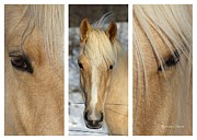 Horse Portrait Photos - Miss Daisy by Benanne Stiens