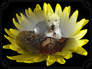 Dogs Mixed Media - Miss Daisy in a Flower - West Highland White Terrier Puppy by Photography Moments - Sandi