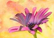 Backlit Prints - Miss Daisy Print by Sabrina L Ryan