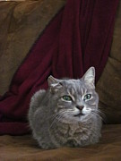 Photos Of Cats Photos - Miss Lucille by Guy Ricketts