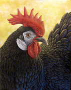 Hen Paintings - Miss Rosie by Cara Bevan