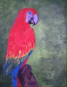 Macaw Mixed Media - Miss Vickie Macaw by Barbara Samples