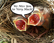 Baby Cardinals Posters - Miss You Greeting Card Poster by Al Powell Photography USA