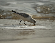 Shore Birds Photos - Mission Complete by Ernie Echols