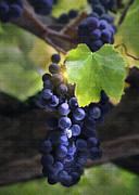 Blue Grapes Digital Art Framed Prints - Mission Grapes II Framed Print by Sharon Foster