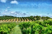 Agriculture Digital Art - Mission Peninsula Vineyard ll by Michelle Calkins