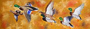 Mallards Paintings - Mississippi Delta Mallards by Karl Wagner