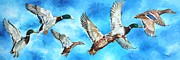 Mallards Paintings - Mississippi Mallards in Flight by Karl Wagner