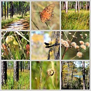 Plants Wildflowers Prints - Mississippi Nature Collage Print by Carol Groenen