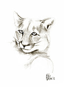 Wild Animal Drawings Prints - Missouri Mountain Lion II Print by Kip DeVore