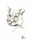Missouri Mountain Lion II Print by Kip DeVore