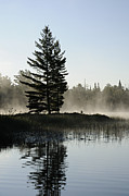 Mist And Silhouette Print by Larry Ricker