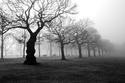 Mist Metal Prints - Mist in the park Metal Print by Mark Rogan