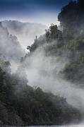Josef Photos - Mist in trees at Franz Josef glacier by Sheila Smart