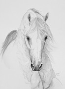 Equine Art Framed Prints - Misterioso 2013 Framed Print by Janina  Suuronen