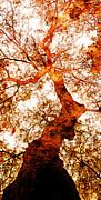 Juan Jose Espinoza - Misterious Tree 2