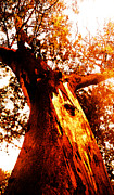 Juan Jose Espinoza - Misterious Tree