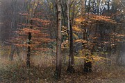 Hugo Bussen - Mistic Autumn