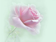 Light Pink Roses Prints - Misty Dream Pink Rose Flower Print by Jennie Marie Schell