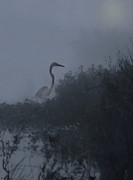 Deborah Smith - Misty Egret Silhouette