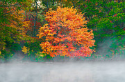 Turning Leaves Prints - Misty Fall tree Print by Anthony Sacco