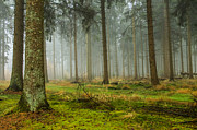 Patricia Hofmeester - Misty forest