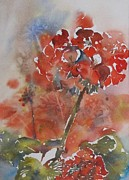 Red Geraniums Prints - Misty Geraniums Print by Beena Samuel