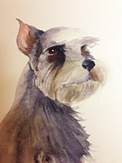 Miniature Schnauzer Paintings - Misty by Linda F Hawkins